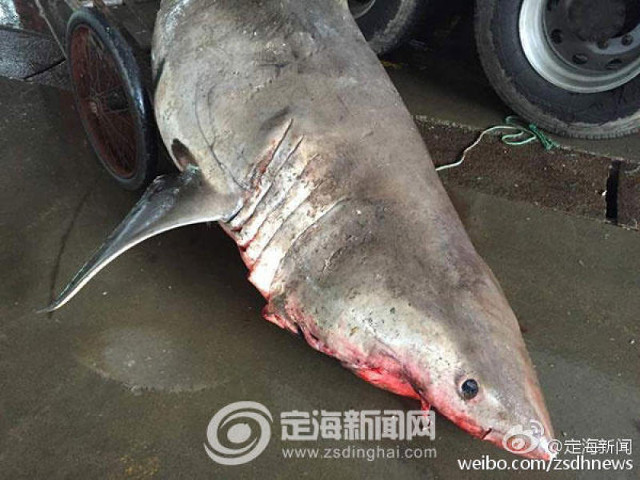 Фото: zsdinghai.com