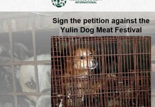 Новая петиция против фестиваля собачьего мяса в Китае собирает подписи
