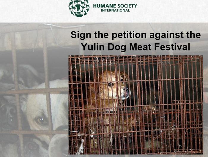 Фестиваль собачьего мяса в Юйлине 2016