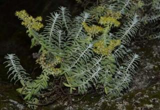 Китайский ученый обнаружил новое растение в Кении