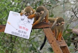 Обитатели зоопарка в Чунцине присоединились к антитабачной кампании