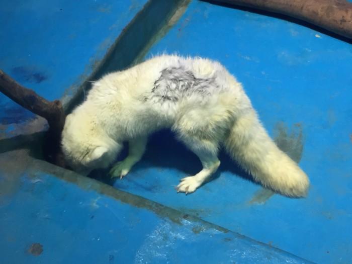 Защита животных в Китае