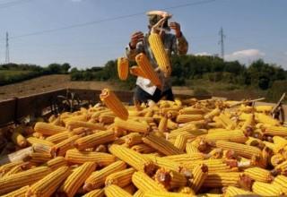 Как российские СМИ запретили импорт украинского зерна в Китай