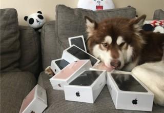 Сын китайского миллиардера купил своей собаке восемь iPhone 7