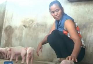 В Китае родился удивительный поросенок с тремя глазами и двумя пятачками