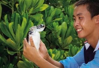 На юге Китая откроют центр по спасению черепах