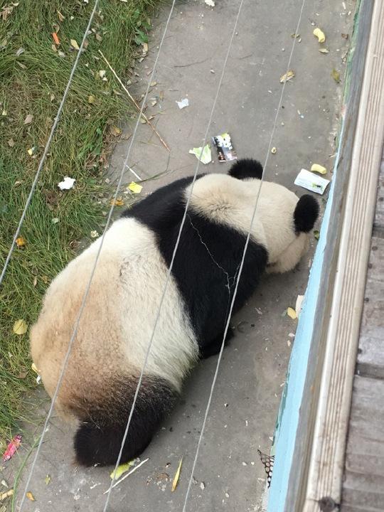 sad_panda28