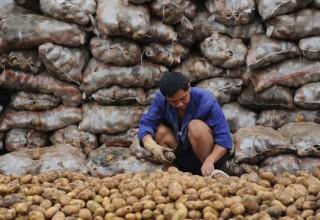 Жители китайского города помогли старику продать 32 тонны картофеля за несколько часов