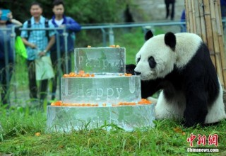 В Китае умер старейший в мире самец большой панды