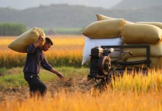 Китайские сельхозпроизводители делают ставку на интернет-торговлю