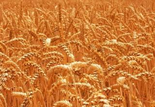 РФ обсуждает с КНР смягчение ограничений на импорт российской сельхозпродукции