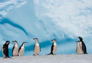 Китай и Россия договорились о сотрудничестве в Антарктике