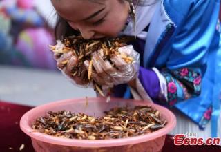 В китайской провинции Юньнань прошло соревнование по поеданию насекомых (ФОТО)