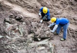 В Китае обнаружена крупная «стена» из останков динозавров, относящаяся к юрскому периоду