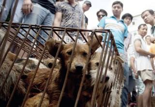 В Китае в магазинах сети Carrefour обнаружено собачье мясо
