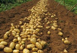 Китай посадит картошку на Луне