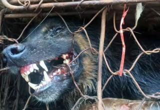 Волонтеры в Китае спасли 1000 собак накануне Юйлиньского фестиваля