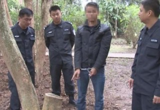 В Китае трое мужчин получили 8 лет тюрьмы за кражу редкого дерева из ботанического сада