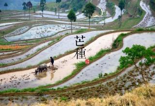 Сезон «колошения хлебов» в Китае: что можно, а что нельзя делать в начале лета