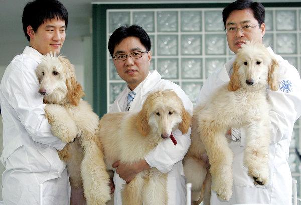 КНР 1-ый вмире клонировал собаку спомощью корректирования генов