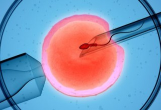 Китайский бизнес на донорстве яйцеклеток: откровения россиянки