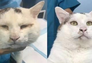 Кот стал звездой китайского интернета после операции на глаза