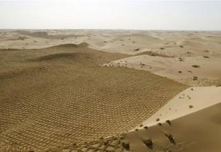 В Китае ученые научились выращивать урожай в пустыне