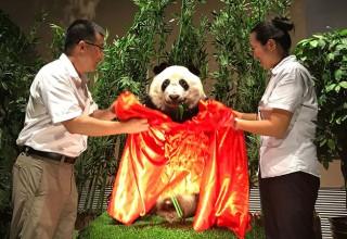 «Это неуважение к нашему символу»: Китайцы выступили против чучела панды в музее