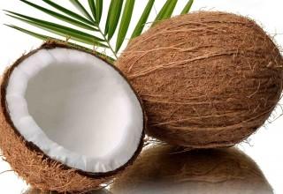 Китайские ученые расшифровали геном кокоса