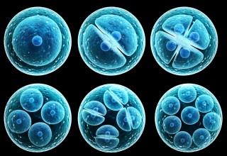 Китай установил стандарты на лечение стволовыми клетками