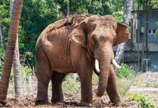 В Китае дикий слон вышел погулять и повредил 2 транспортных средства