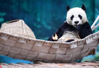 Китай в фотографиях за неделю (18-24 декабря)