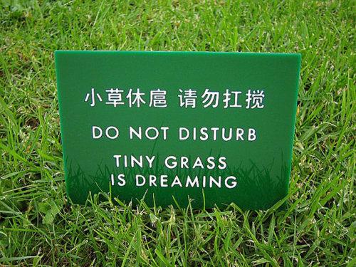 Не беспокоить. Маленькая трава мечтает