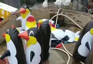 В китайском зоопарке показали надувных пингвинов