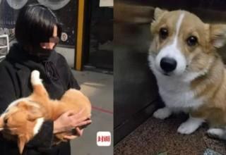 Китаянка шантажировала хозяйку потерянной собаки, а потом выбросила животное из окна