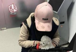 Китаянка притворилась беременной, чтобы пронести собаку в самолет