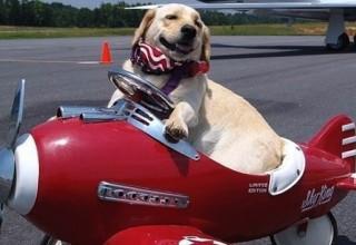 Китай в тестовом режиме разрешил брать домашних животных в самолет