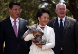 Генерал-губернатор Австралии с председателем КНР Си Цзиньпином и его женой Пэн Лиюань, которая держит на руках вомбата, Cидней.