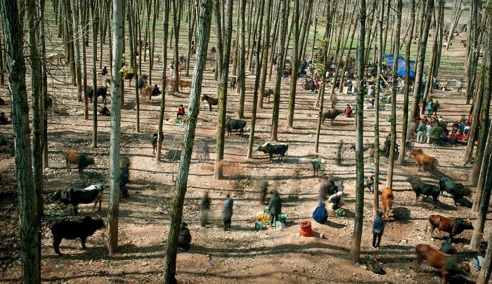 6 китайских фотографов-победителей World Press Photo 2015