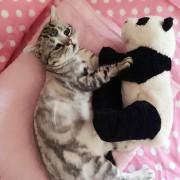 грустная кошка Луху из Пекина