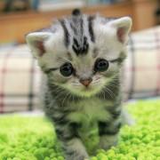 Печальная кошка Луху