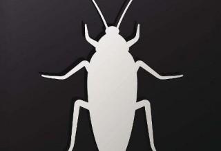«Масочка из пруссаков»: Китай внедряет тараканов в косметологию