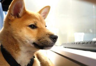 В Гонконге у собаки выявили коронавирус Covid-19