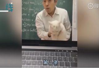 Преподаватель в Китае объяснял химические формулы с помощью кота