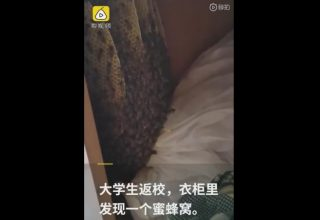 В китайском общежитии за полгода карантина завелись пчелы