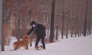 снег в Китае