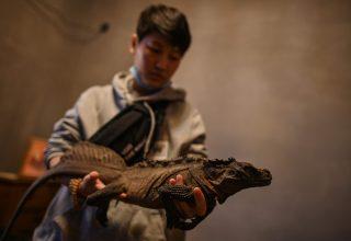 От енотов до змей: в Шанхае растет популярность кафе с экзотическими животными