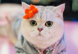 «Мой кот зарабатывает больше, чем я». Домашние питомцы, которые сделали карьеру в Китае