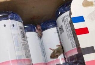 Сюрприз от Tmall. Китаянка нашла мышей среди бутылок с водой